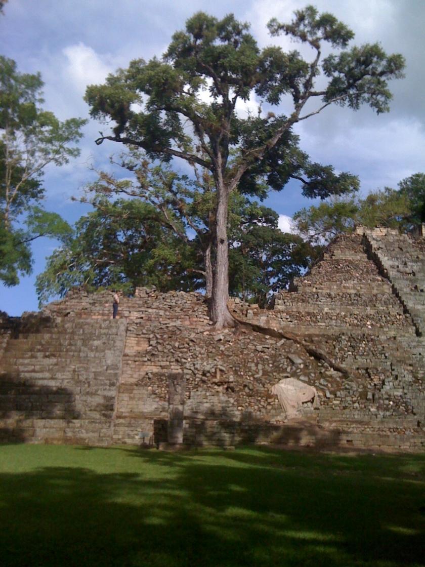 Day 2 Copan Ruins Tree